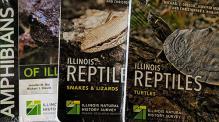 Amphibian, Turtle, Snake Card set