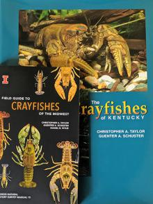 Crayfish of Midwest and Crayfish of Kentucky